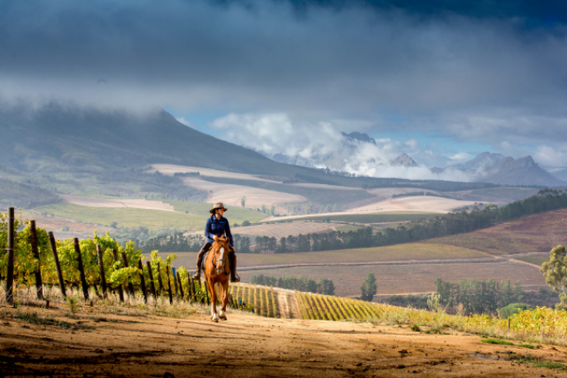 Cape Winelands 4