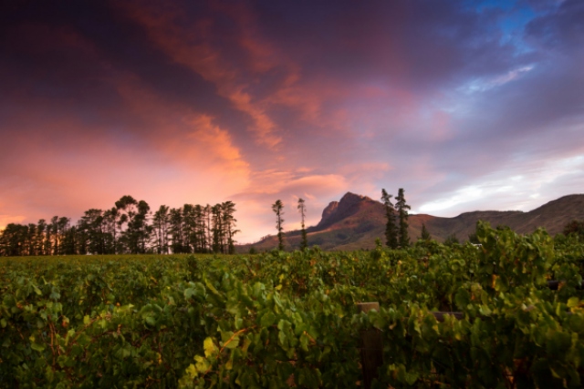 Cape Winelands 5