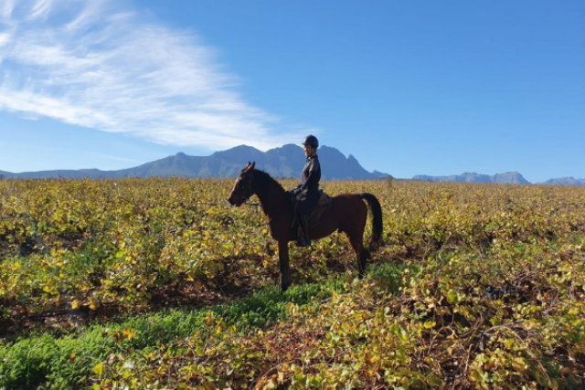 Stellenbosch Vineyard 3