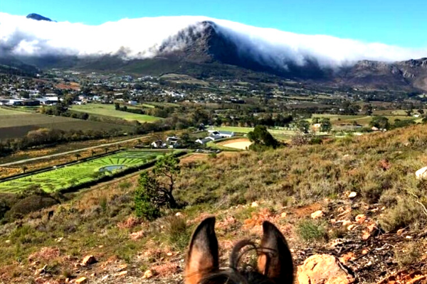 Franschhoek Outrides | Horse Riding Cape Town
