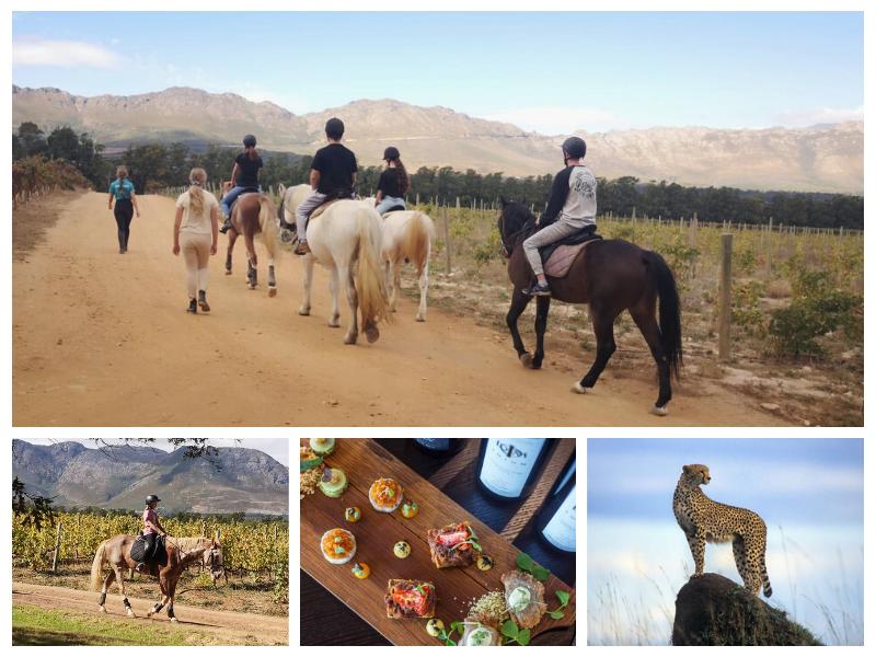 Helderberg Horse Trail and Cheetah Outreach