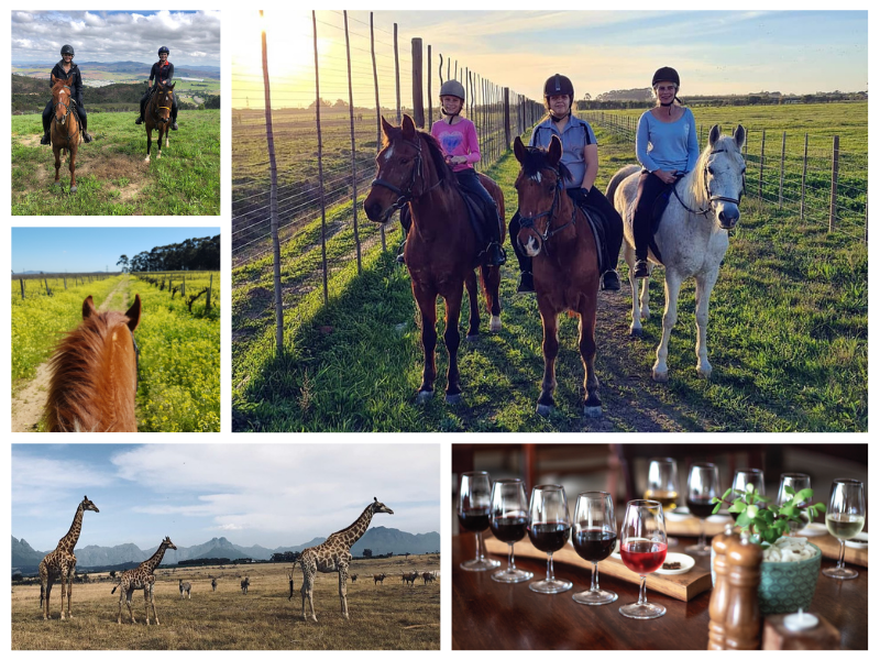 Horse Riding, Game Drive and Wine Tasting