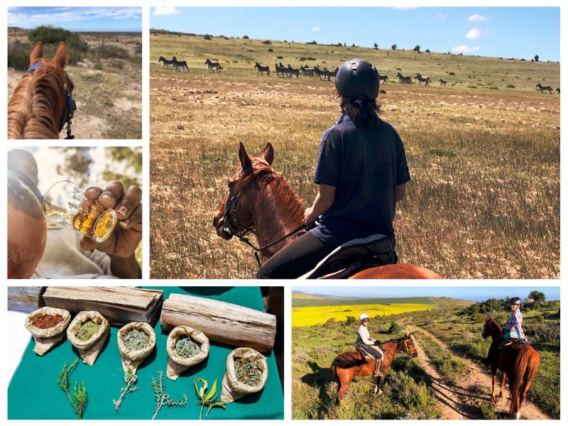 Khwattu Horseback Safari and Tea Tasting